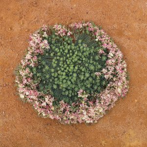 wreath-flower-01